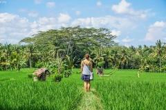 ubud-rice-fields-walk-in-penestanan